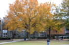 Students walk on-campus during the fall.